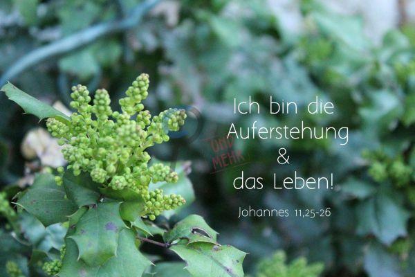 690 - Johannes 11,25-26