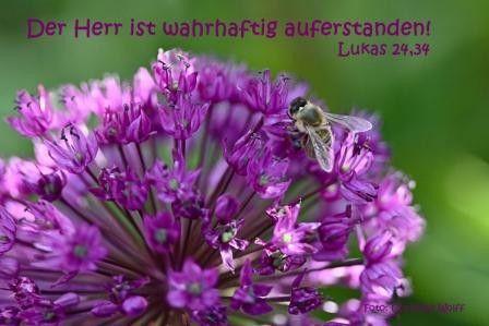 268-Lukas 24, 34