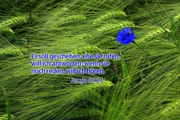 26-Jesaja 65:24