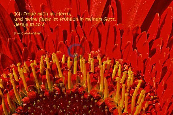 269-Jasaja 61