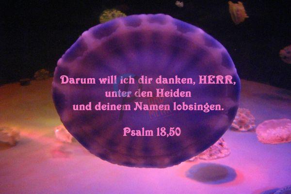 371 - Psalm 18,50