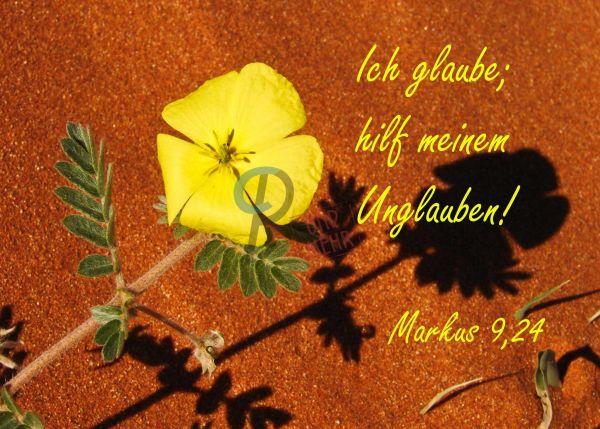 724 - Jahreslosung 2020 - Gelbe Blume