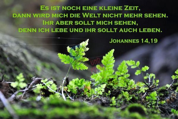 374 - Johannes 14,19