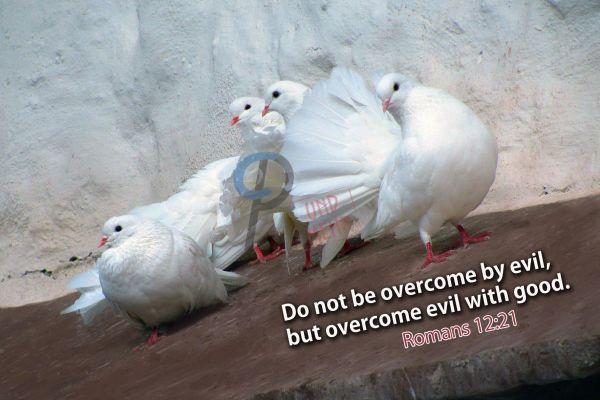 358-Romans 12:21