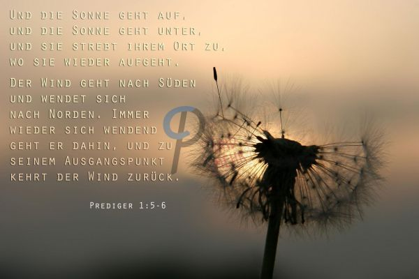 8-Prediger 1:5-6