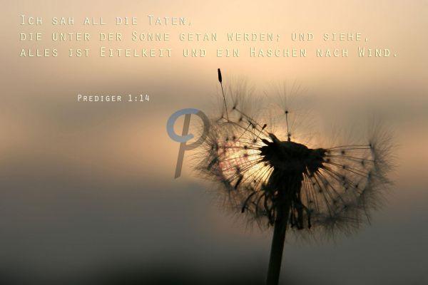 12-Prediger 1:14