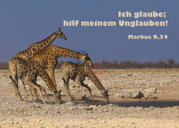 706 - Jahreslosung 2020 - Trinkende Giraffen