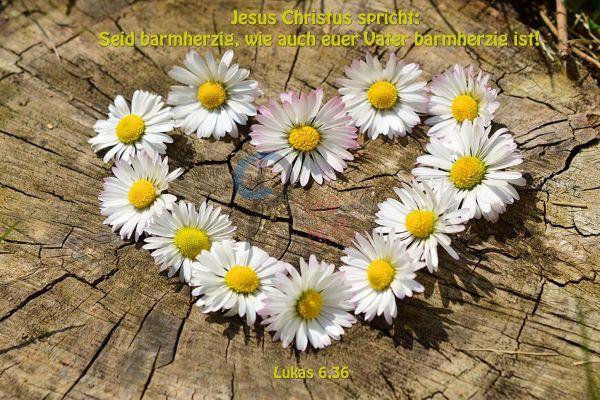 763 - Jahreslosung 2021 - Herz aus Blumen