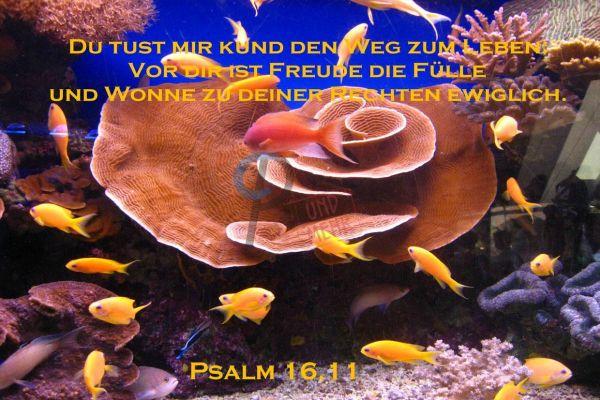 369 - Psalm 16,11